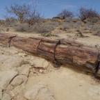 Tag  12: Twyfelfontein, Versteinerter Wald und Brandberg