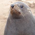Tag 13+14: Cape Cross Seelöwenkolonie und Swakopmund